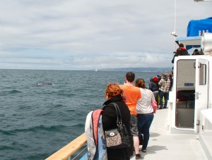 Fin Whale just off the boat