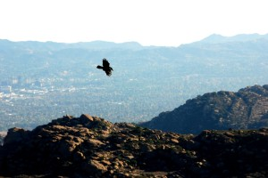 Soaring over the valley
